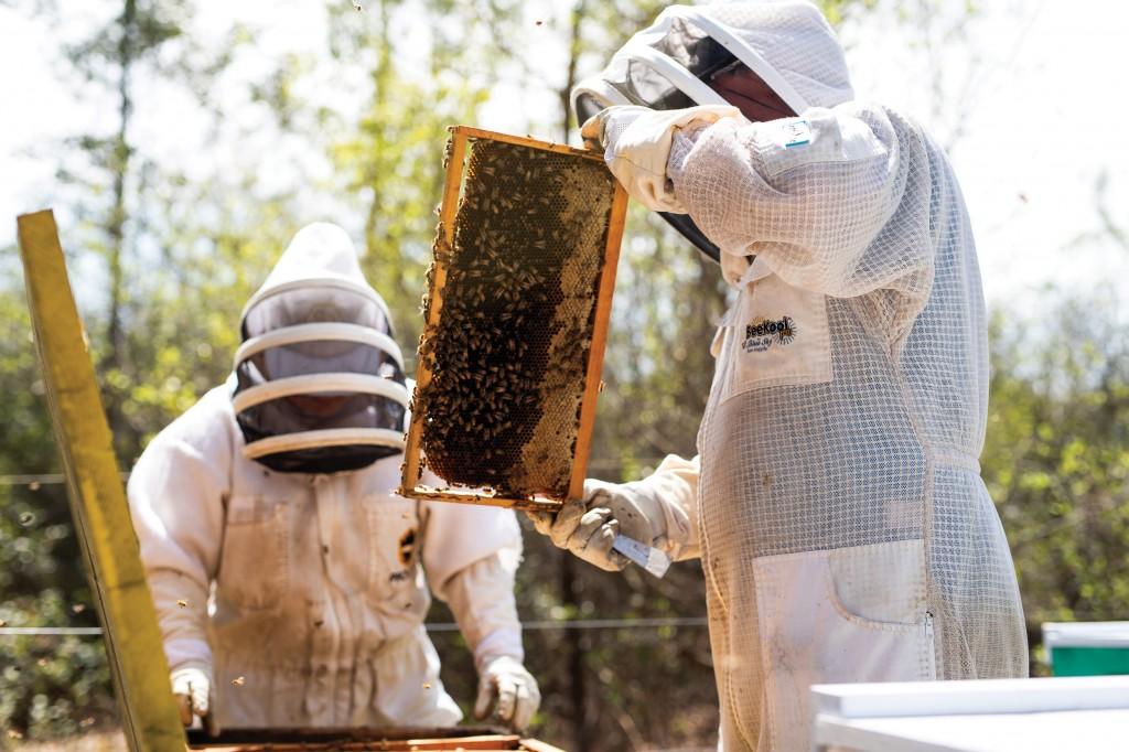 Steves Bees Emerald Coast Magazine Beekeeping Johnharringtonphoto 872 Ccsz