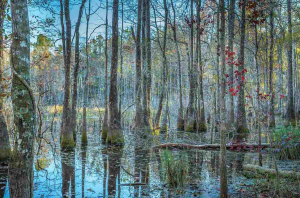 Wakulla Springs Protection Zone